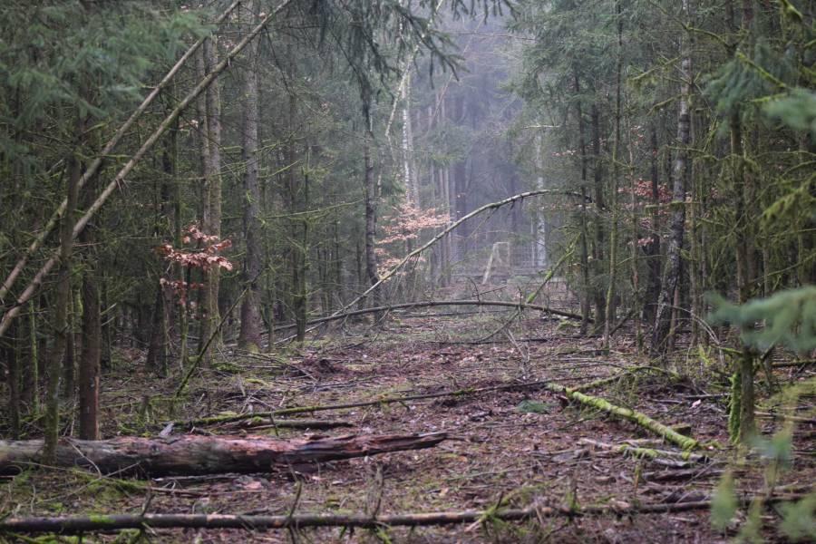 Jagdschneisen im Wald sind unerlässlich (Foto: LJV SH)