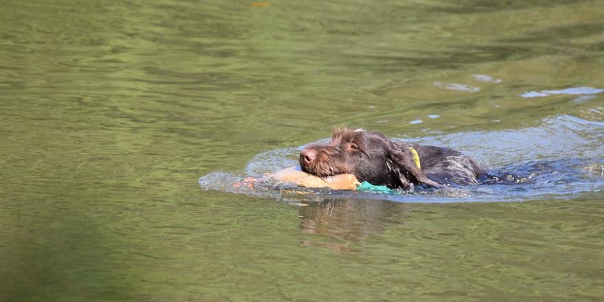 Training für den Einsatz im Wasser (Foto: R.Hartwig/ LJV SH)