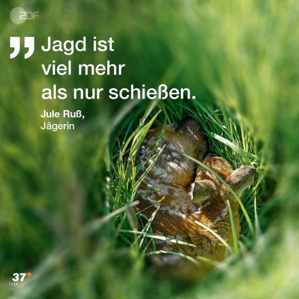 Rehkitz im hohen Gras (Quelle: ZDF/37°)