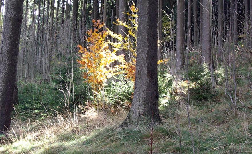 Jagd unterstützt den angestrebten Waldumbau hin zu klimaflexiblen Mischwäldern; Foto: LJV-NRW / H. D. Fuhr