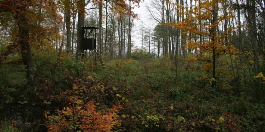 Wald, Wild und Jagd gehören seit Jahrhunderten zusammen (Foto: LJV SH)