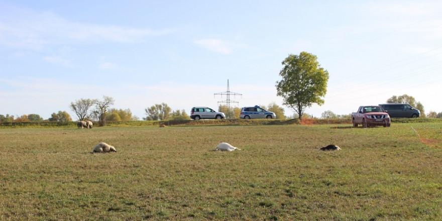 Die Weide am Ortsrand von Cospeda mit den Kadavern dreier toter Tiere (Quelle: Landespolizeiinspektion Jena)