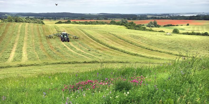 Vom Artenschwund betroffen sind vor allem Wiesen in der Nähe von stark landwirtschaftlich genutzten Flächen.