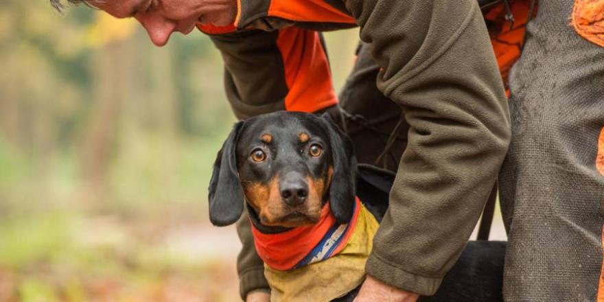 Behandlung von verletzten Jagdhunden: Reserveantibiotika dürfen auch künftig für Haustiere eingesetzt werden. (Quelle: Mross/DJV)