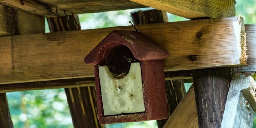 Auch die Pflege und Säuberung von Nistkästen ist im Wald Jägersache. (Quelle: Seifert/DJV)