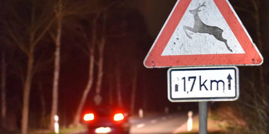Reh, Wildschwein oder Hirsch sind jetzt vermehrt unterwegs. Die Folge: mehr Zusammenstöße als im Schnitt. Der DJV gibt Tipps, wie Verkehrsteilnehmer sicher durch die dunkle Jahreszeit kommen.