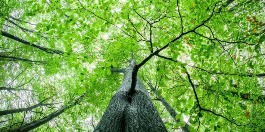Waldstrategie 2050: DJV fordert einen vom BMEL moderierten runden Tisch für praxistaugliche Lösungen. (Quelle: Rolfes/DJV)