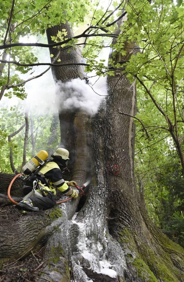 Erst nach ca. zwei Stunden waren alle Glutnester im Baum abgelöscht (Quelle: Berufsfeuerwehr München)
