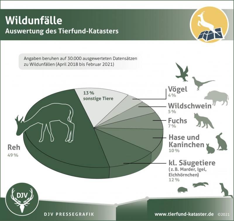 Abbildung 2: Bei der Auswertung des Tierfund-Katasters stellte sich heraus: Vor allem Rehe werden Opfer bei Wildunfällen. (Quelle: https://www.jagdverband.de/die-meisten-wildunfaelle-passieren-im-april)