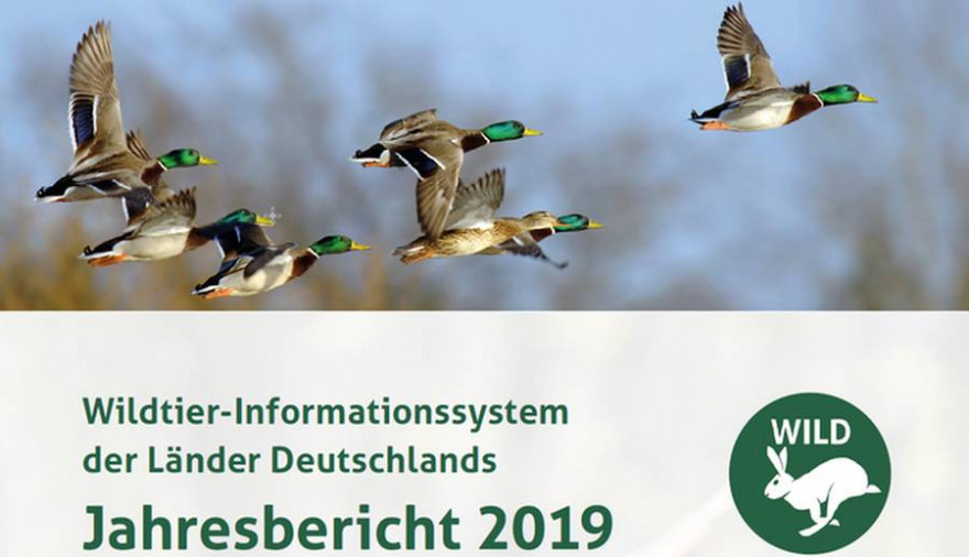 Der DJV hat heute Monitoring-Daten zu 16 ausgewählten Tierarten für das Jahr 2019 im neuen WILD-Bericht veröffentlicht. (Quelle: DJV)