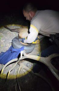 Wildlife Officer Dawson Swanson versucht den Reifen durchzusägen (Foto: Pat Hemstreet)