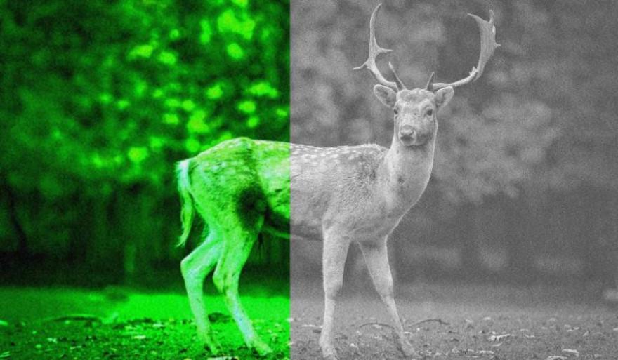 Geisterhaftes Grün oder monochrome Graustufen. Das ist jedoch nur der sichtbarste Unterschied zwischen analoger und digitaler Nachtsichttechnik. (Beispielbild: pixabay.com/hashan)
