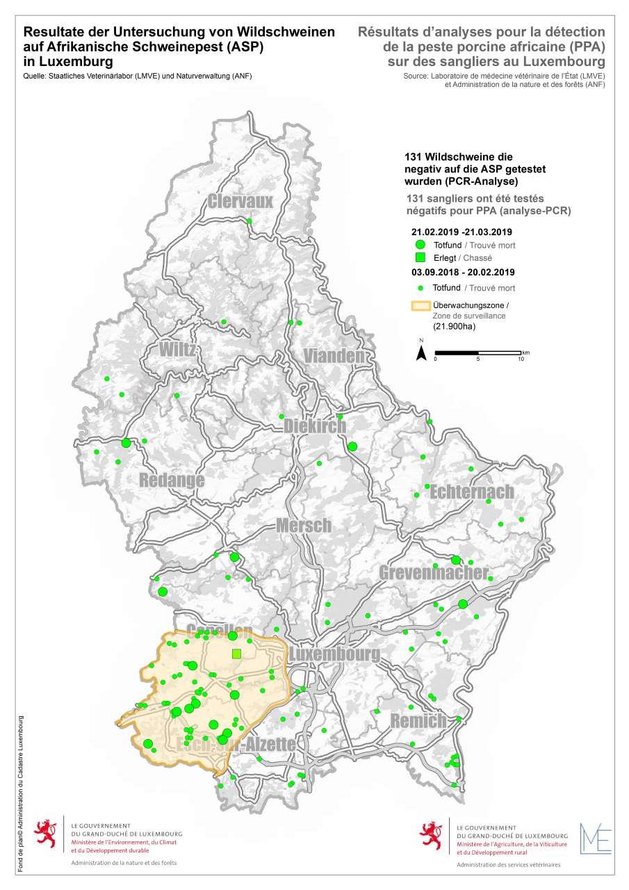 Grafik: Aktueller Stand der Verteilung der Wildschweine und Resultate der Untersuchung auf Afrikanische Schweinepest (ASP) in Luxemburg (21.03.2019): Gesamtzahl der eingesendeten Schweine: 131; Anzahl der auf ASP getesteten Wildschweine mit negativem Resultat: 131; Anzahl der noch zu untersuchenden Wildschweine: 0Quelle: Staatliches Veterinärlabor (LMVE) und Naturverwaltung (ANF)