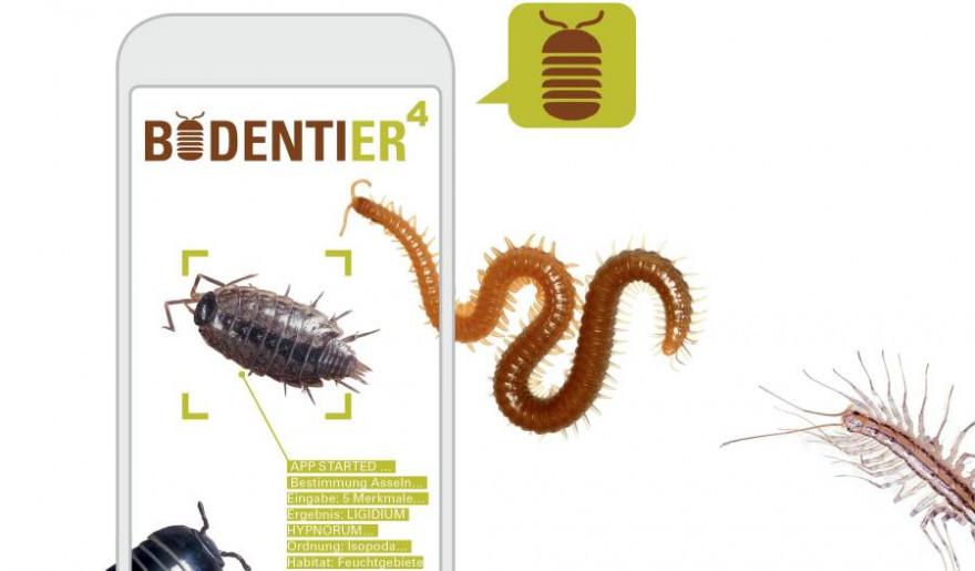 Mit der App 'BODENTIER hoch 4' können Bürgerwissenschaftler Bodentiere bestimmen (© Carrascal/Dindin)