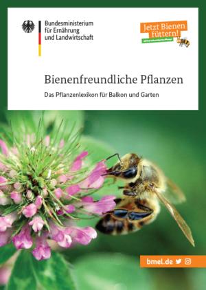 Sie sind noch auf der Suche nach geeigneten Pflanzen? In unsererBroschürestellen wir eine Auswahl von mehr als 100 Pflanzen vor, die besonders bestäuberfreundlich und für unterschiedliche Standorte geeignet sind. Quelle: BMEL