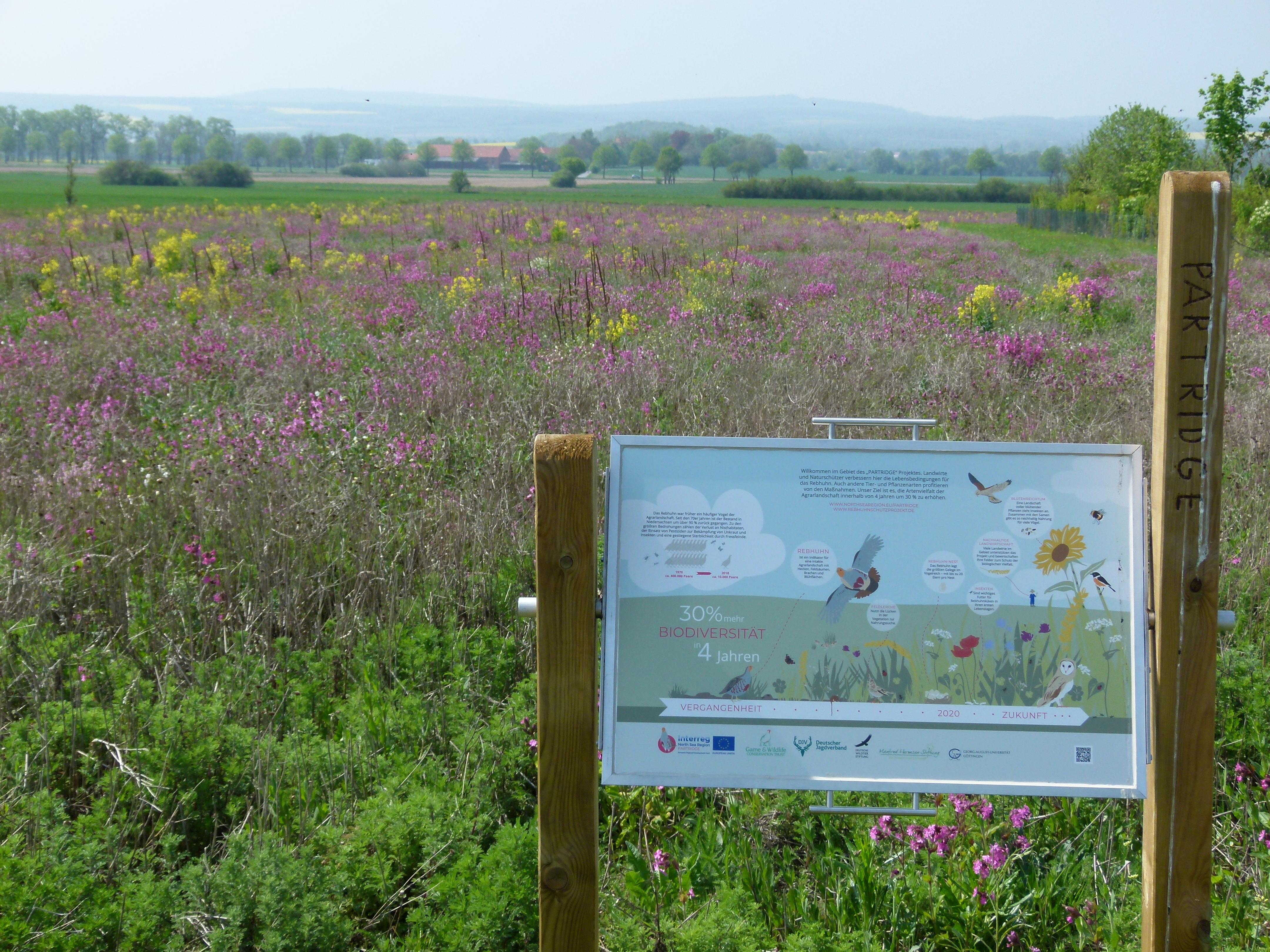 Bei PARTRIDGE stellen lokale Landwirte Flächen für den Schutz von Arten der Agrarlandschaft bereit (Quelle: DJV)