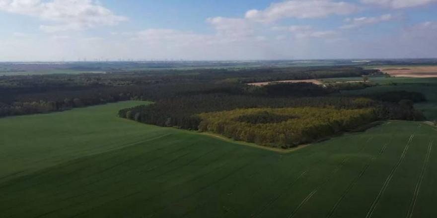 Der Blumberger Wald (Foto: Screenshot)