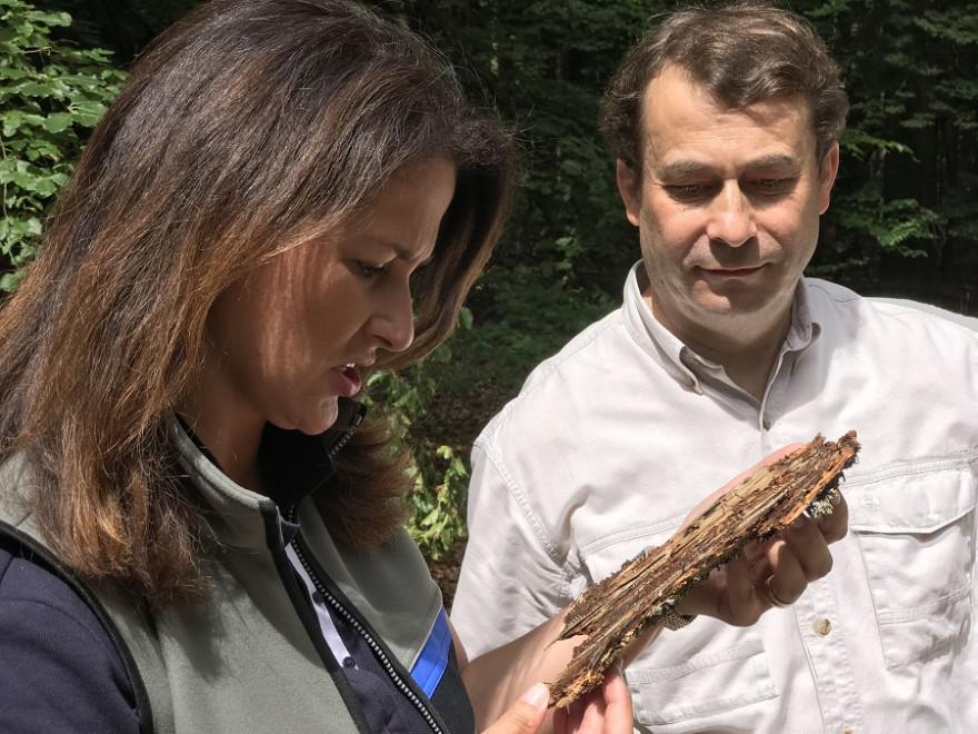 Landwirtschaftsministerin Michaela Kaniber mit Waldbesitzer-Präsident Josef Ziegler