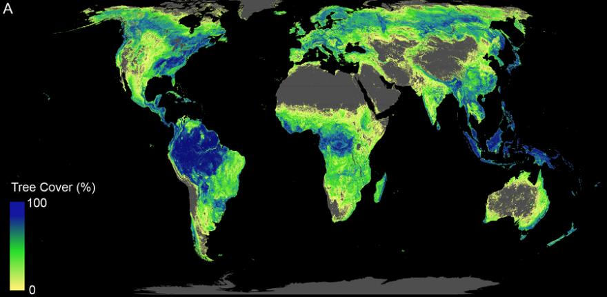 Gesamte verfügbare Fläche, auf der Bäume wachsen könnten (aktueller Waldbestand und für Wiederaufforstung geeignete Fläche). (Bild: Crowther Lab / ETH Zürich)