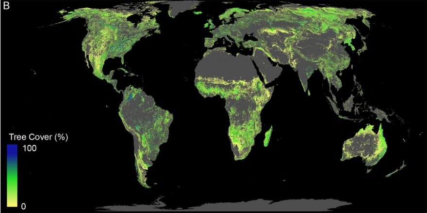 Diese Fläche ist für die Wiederaufforstung von Wäldern verfügbar (ohne bestehende Wälder, Landwirtschaftsflächen, Wüsten und Städte). (Bild: Crowther Lab / ETH Zürich)