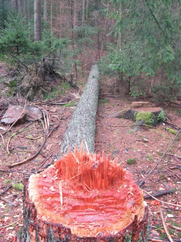 Deutlich sind die Spuren zu erkennen, die die Axt im Holz hinterlassen hat (Foto: Polizei)