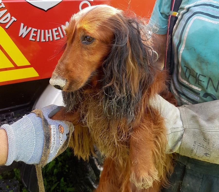 Fotos: Freiwillige Feuerwehr Weilheim