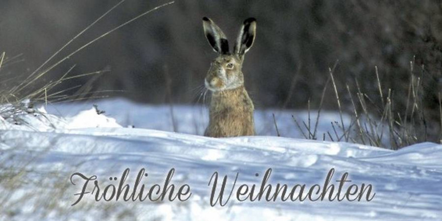 Hase im Schnee (Foto: Eugène Reiter)