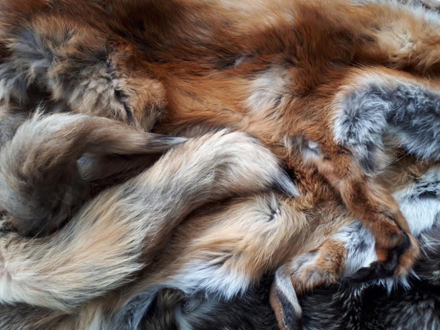 Felle von Fuchs und Waschbär