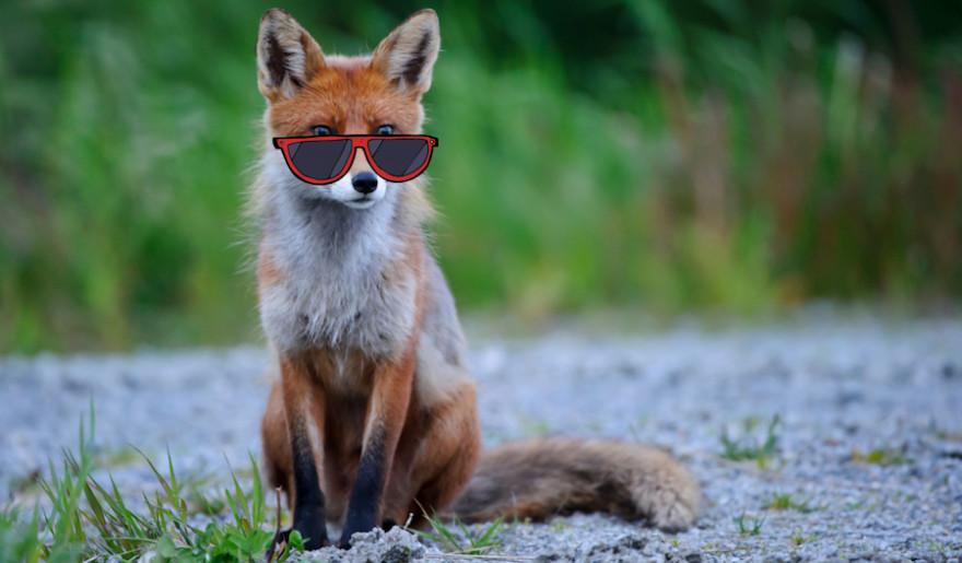 Tiere haben unterschiedliche Strategien, um im Sommer cool zu bleiben. (Quelle: Rolfes/DJV)