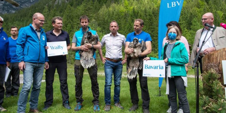 Taufe der Bartgeier Wally und Bavaria (Foto: Hansruedi Weyrich/LBV)