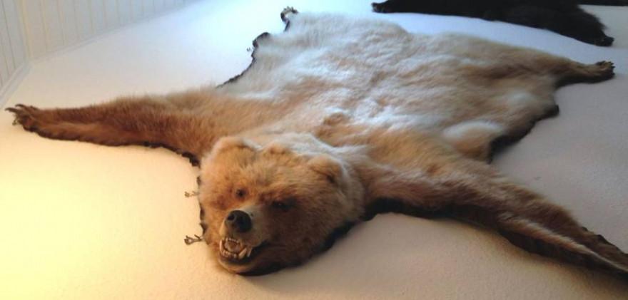 Dieses Grizzlyfell entwendeten die Unbekannten bei dem Einbruch. (Foto: Polizei Minden-Lübbecke)