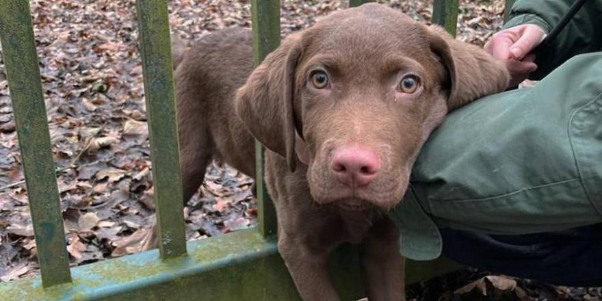 Der Hundewelpe blieb bei dem Versuch durch das Gitter eines Eisentores zu schlüpfen hängen (Bildquelle: Feuerwehr Herdecke)