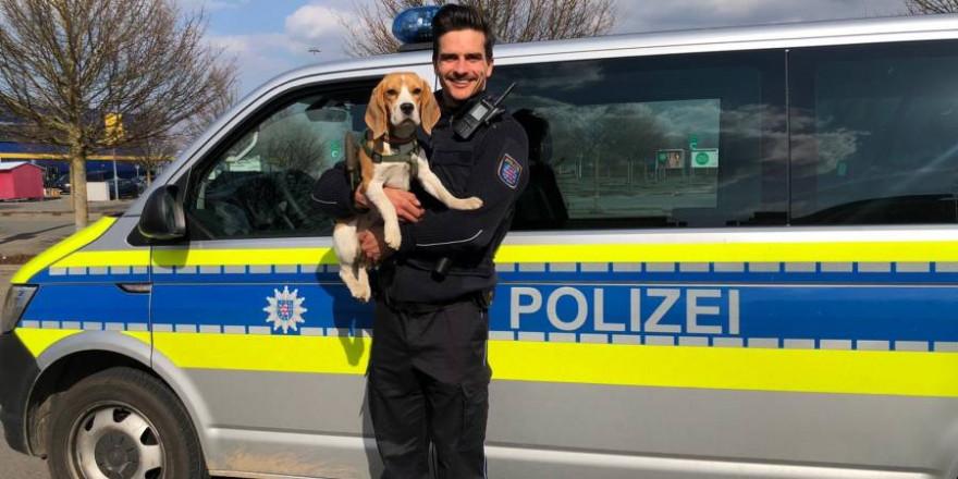"""Beaglehündin """"Käthe"""" mit einem der beteiligten Polizisten (Foto: Polizei)"""