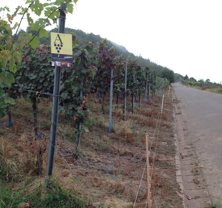 Elektrozäune sollen Wildtiere vom Weinberg fernhalten.