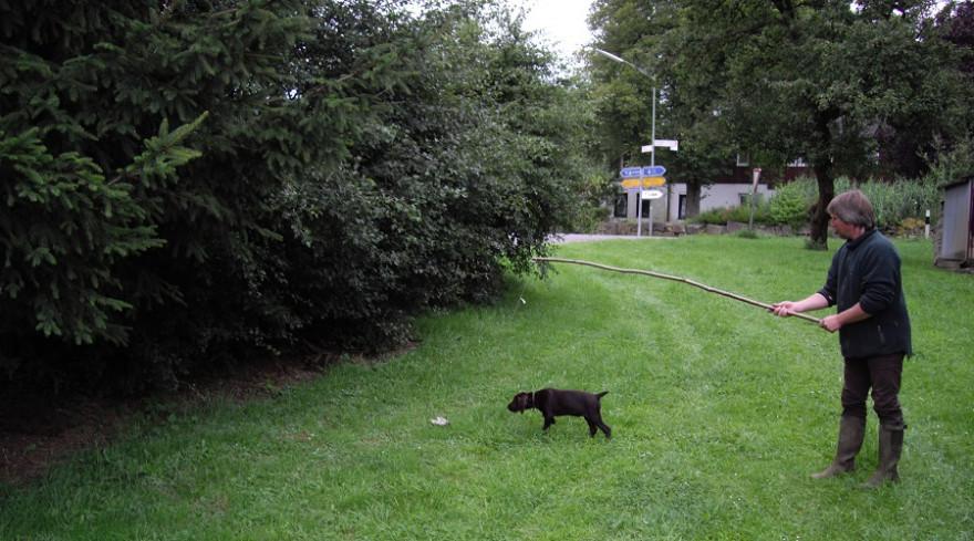 Hundeausbildung mit der Reizangel