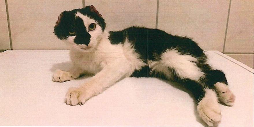 Den überlebenden Katzenjungen wurden die Ohren sowie die Schwänze abgetrennt.