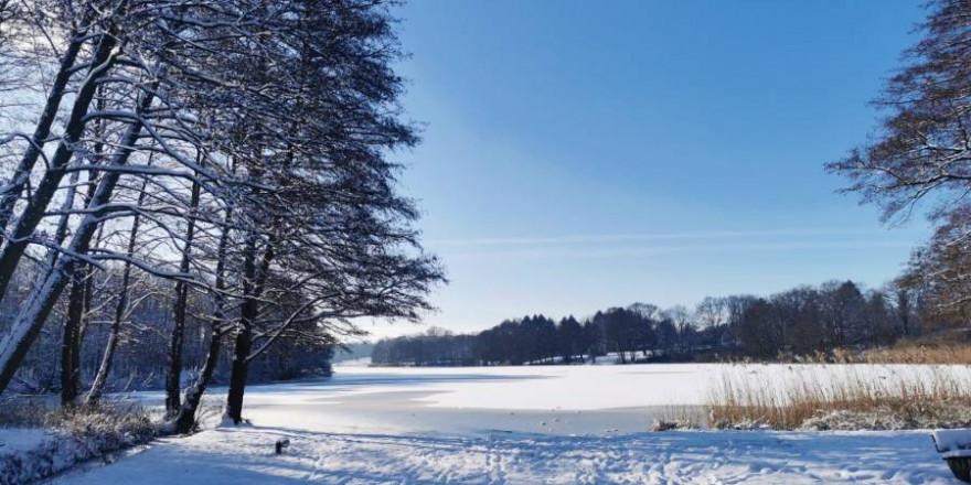 Der zugefrorene Lütjensee. Das Eis des Sees war nicht dick genug, um die Last der flüchtenden Rehe zu tragen. (Foto: NK)