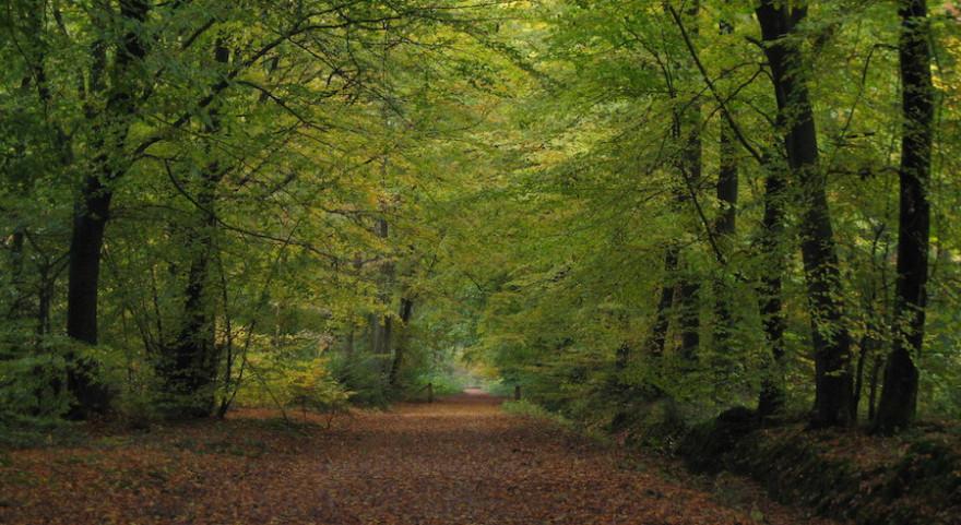 Auf einem Waldweg im Frühjahr.