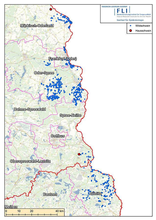 Karte: Erste Fälle von Afrikanischer Schweinepest bei Hausschweinen in Deutschland im Landkreis Spree-Neiße und in Märkisch-Oderland (Quelle: © FLI)