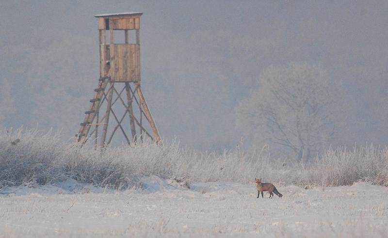 Hochsitz in Winterlandschaft