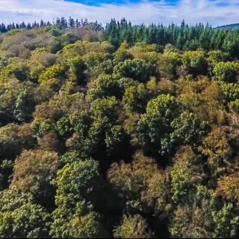 In Buchenwäldern haben die Hitzesommer Spuren hinterlassen: Fast die Hälfte der Bäume sind vielerorts in Hessen geschädigt. (Drohnenpilot: Volker Heymann/Foto: Markus Pfenninger)