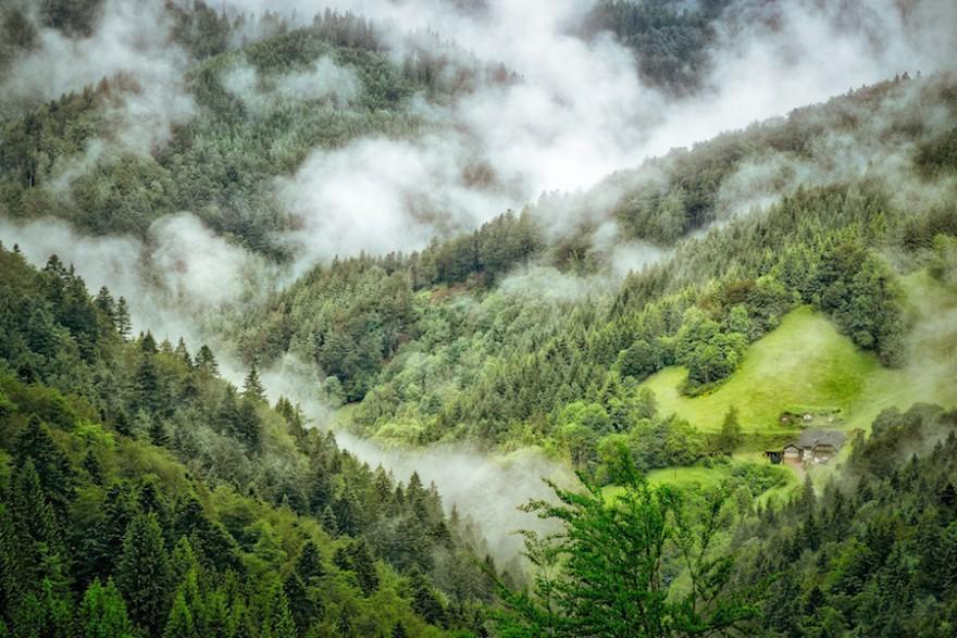 Der nebelverhangene Schwarzwald