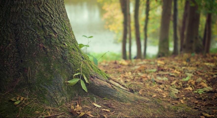 Ein Baumstamm
