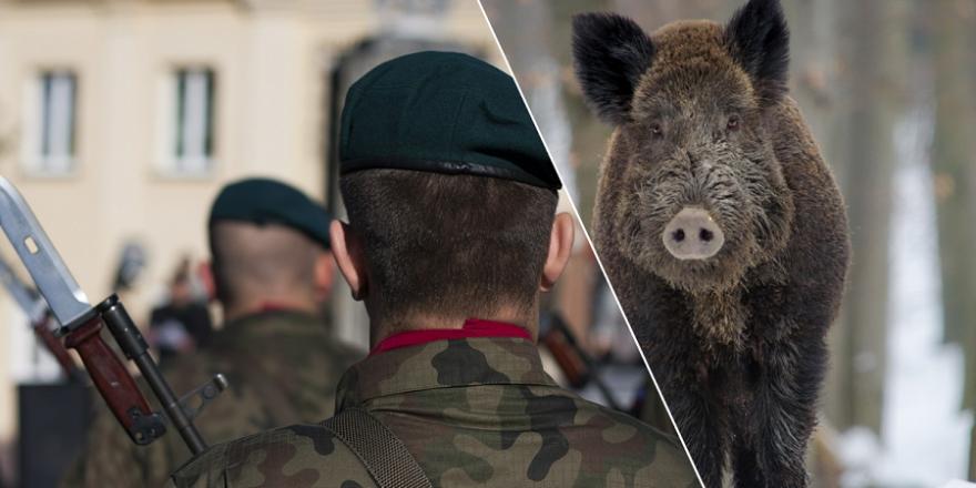 In Polen könnten in Zukunft auch Soldaten und Polizisten Wildschweine schießen dürfen. (Foto: Rafał Kozanecki/Andrea Bohl)