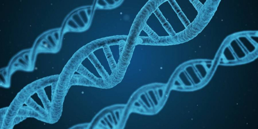 Wissenschaftler entdeckten 30 neue Gene des Schweinepestvirus (Beispielbild: Arek Socha)