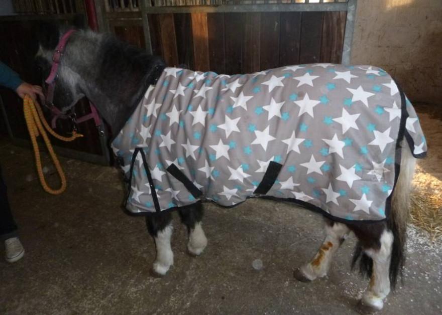 Das verletzte Pony mit sichtbaren Schnittverletzungen (Foto: Polizei)