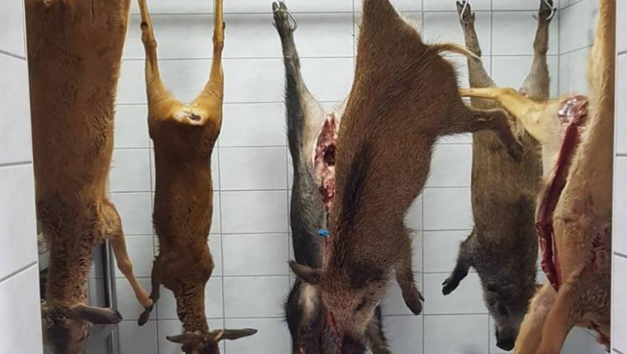 Schwarzwild und Rehwild in einer Kühlkammer hängend (Beispielbild: mlz)