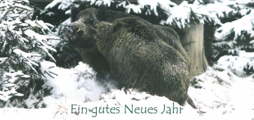 Zwei Keiler im Schnee (Foto: Erich Marek)