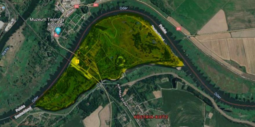 Auf dieser Oderinsel vor Küstrin-Kietz (hier gelb markiert), wurden ca. 30 zum Teil schon verendete Wildschweine durch Drohnen gefunden (Quelle: Screenshot GoogleMaps)
