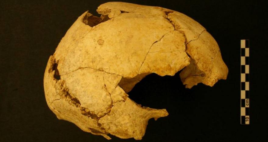Menschlicher Schädel (Mollet III) von Serinyà aus früheren Ausgrabungen. (Foto: Joaquim Soler)